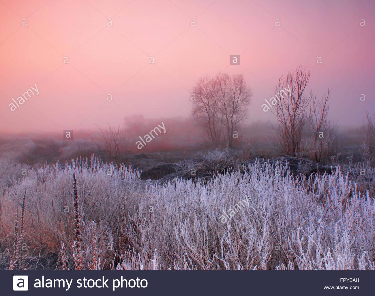 Misty dawn sul campo Immagini Stock