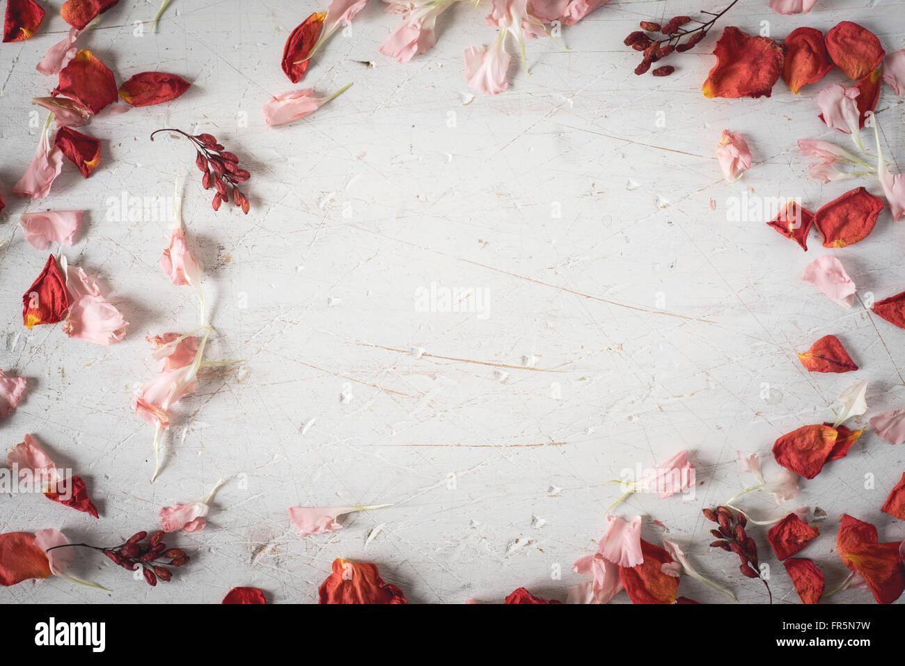Il telaio da essiccato di petali di fiori in orizzontale Immagini Stock