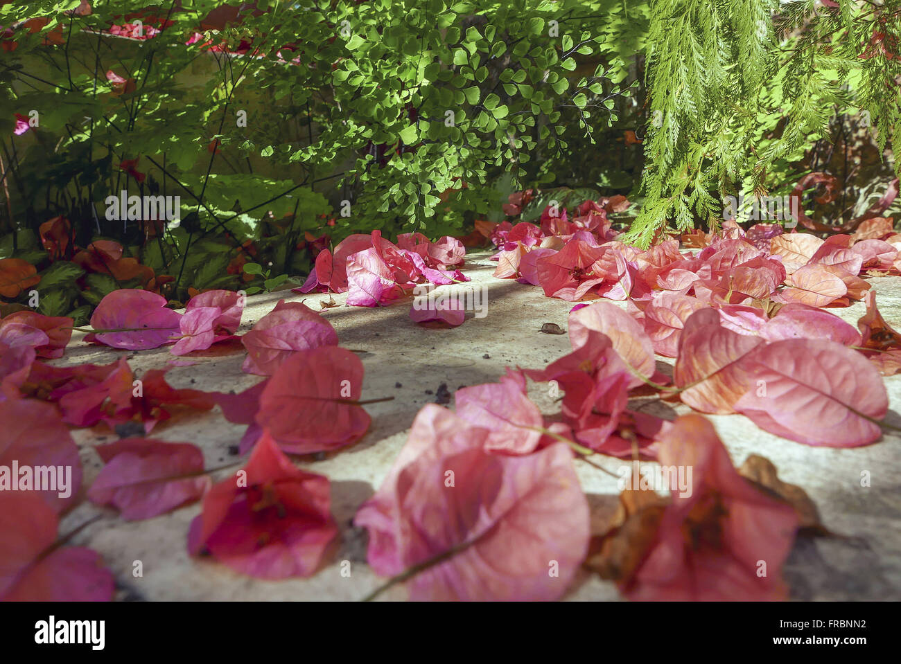 Petálas de primavera no Jardim de inverno de residência Immagini Stock