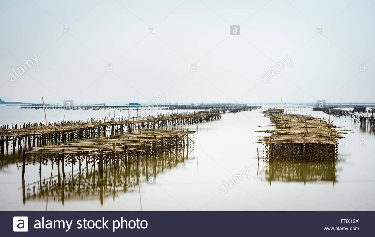 Oyster le strutture agricole esposte durante la bassa marea, la baia di Ha Long, Quang Ninh Provincia, Vietnam Immagini Stock