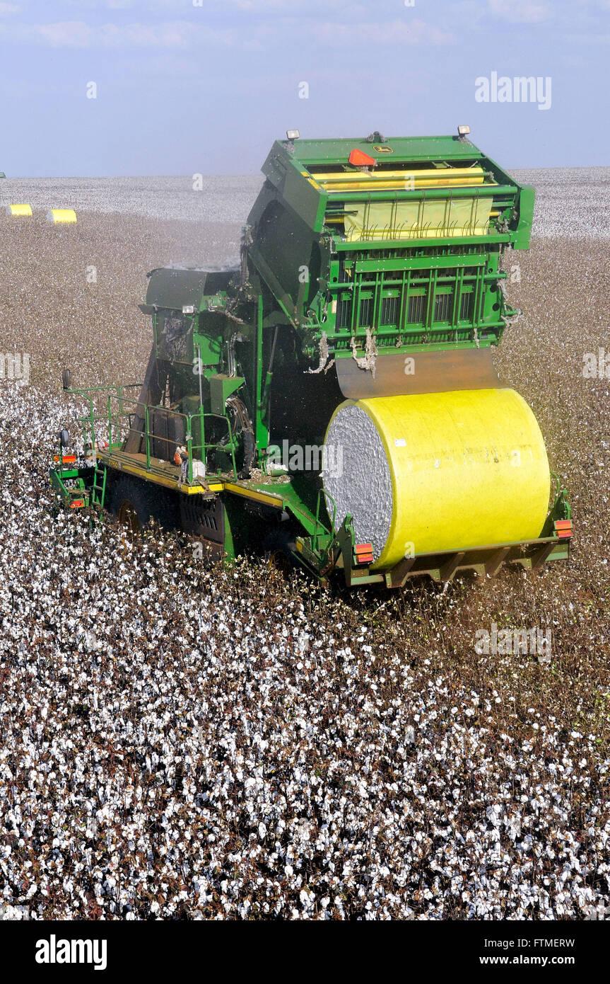 Le piantagioni di cotone e di combinare la tecnologia avanzata Immagini Stock