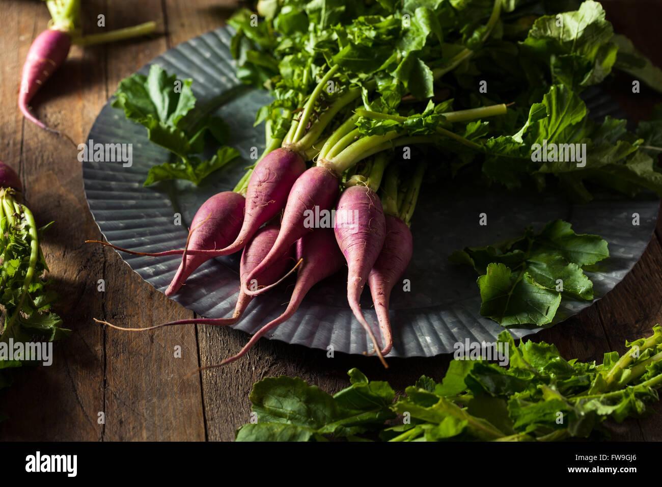 Materie organiche Ravanelli viola pronto a mangiare Immagini Stock