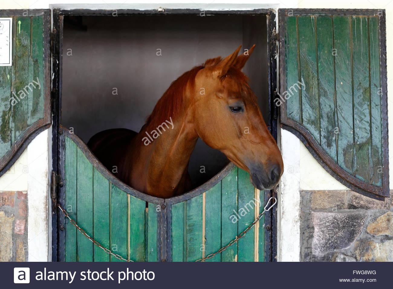 Alla luce del giorno piani fotografato vicino ritratto di corse di cavalli Immagini Stock