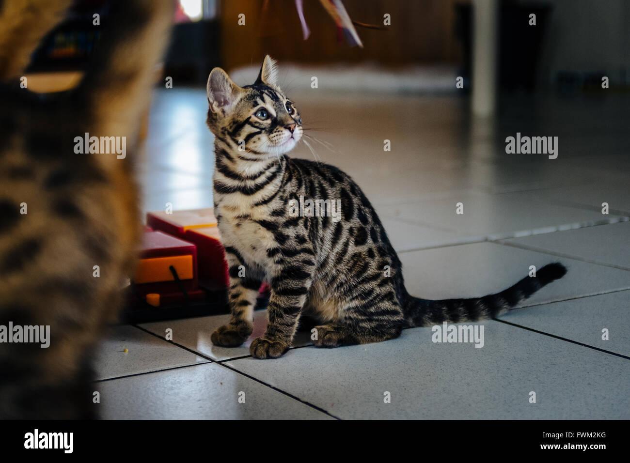 Gatto seduto sul pavimento di piastrelle a casa foto immagine