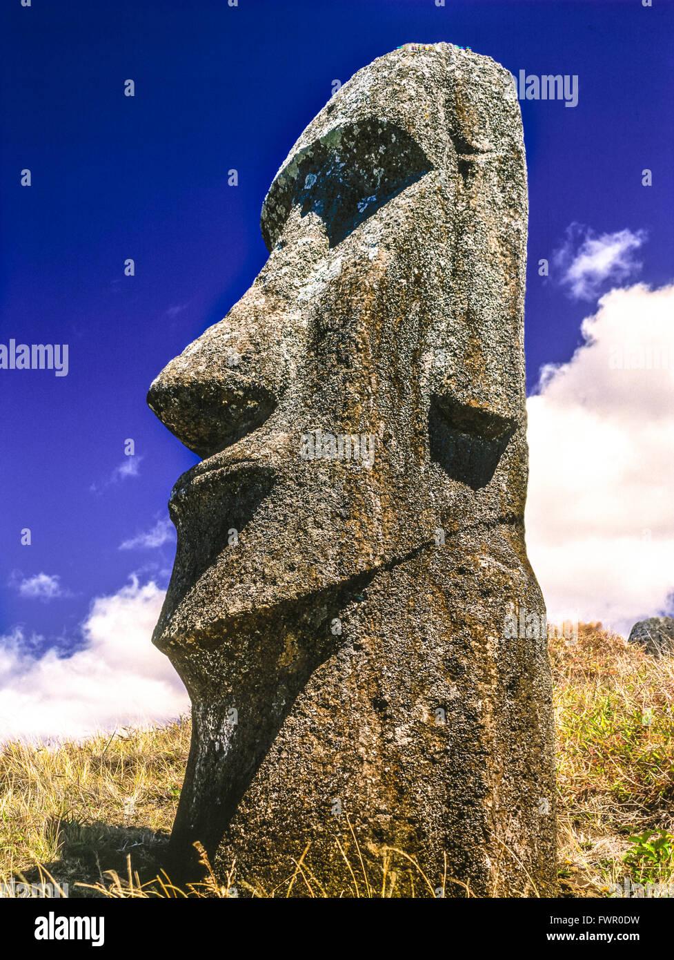 Moais cava. Rano Raraku Vulcano. Isola di Pasqua. Immagini Stock