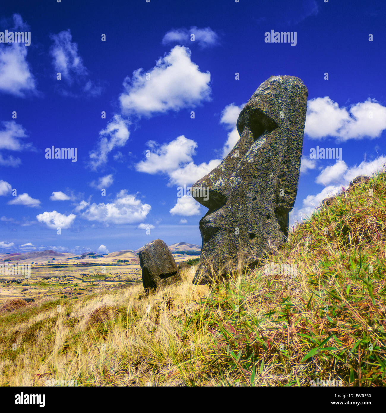 Moais a Rano Raraku. Isola di Pasqua. Immagini Stock