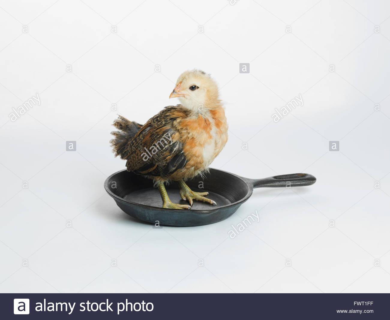 Pollo in piedi in padella Immagini Stock