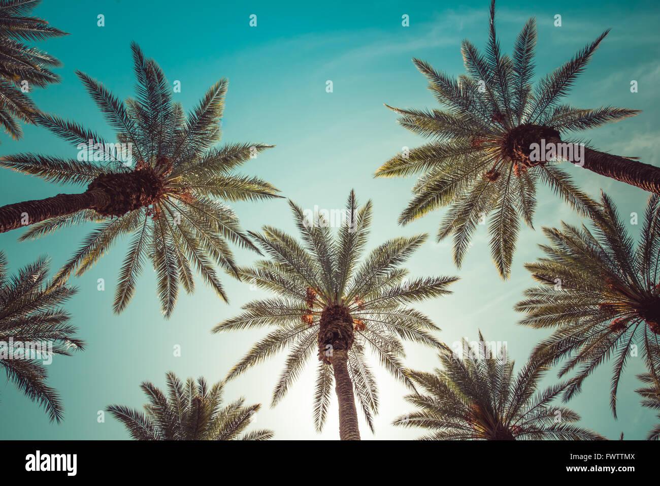 Gli alberi di palma, beverly hills, los angeles,rodeo drive,l'estate,vintage,SKY,natura,naturale,corona-simili Immagini Stock