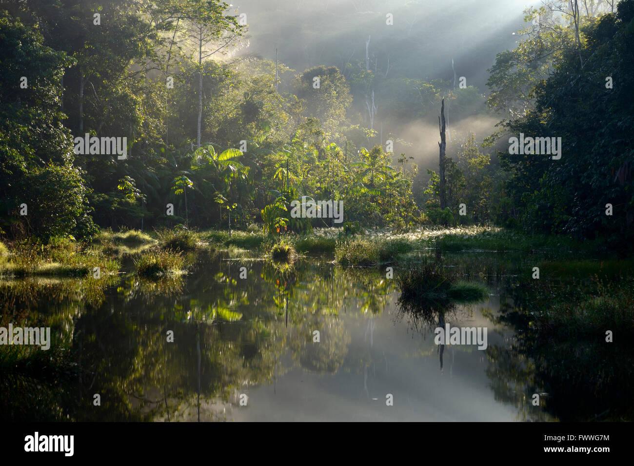 Piccolo lago nella luce del mattino, la foresta pluviale amazzonica tra Itaituba e Pimental, Pará, Brasile Immagini Stock