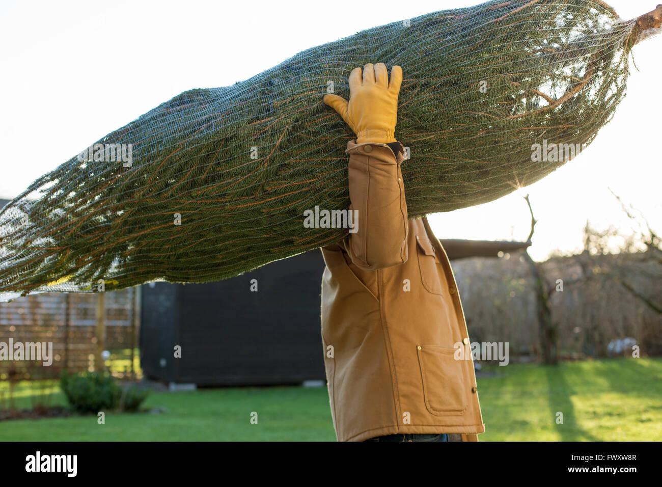 La Svezia, Vastergotland, vista laterale di uomo che porta albero di natale Immagini Stock