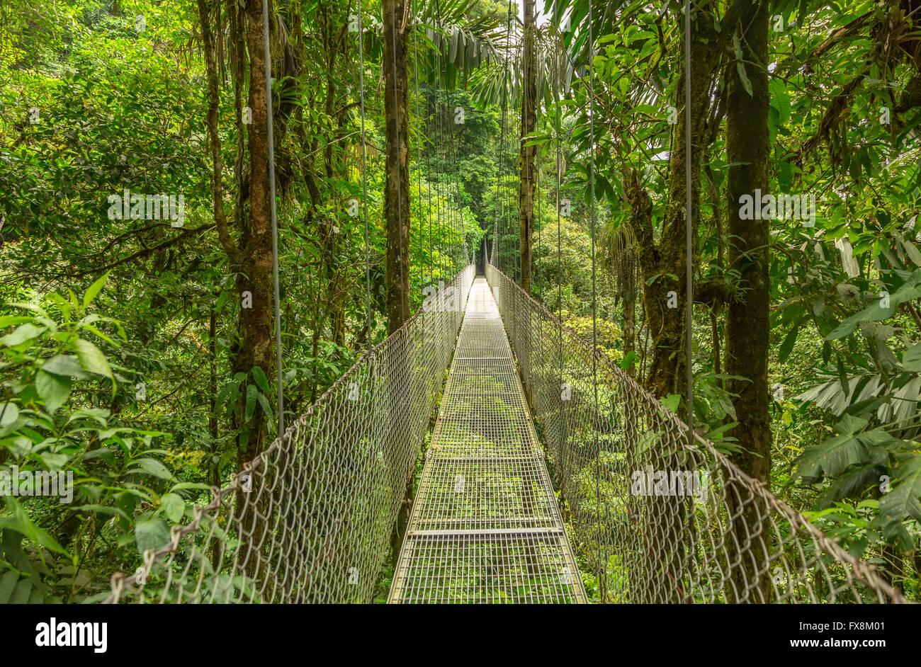 Ponte sospeso a foresta pluviale naturale parco, Costa Rica Immagini Stock