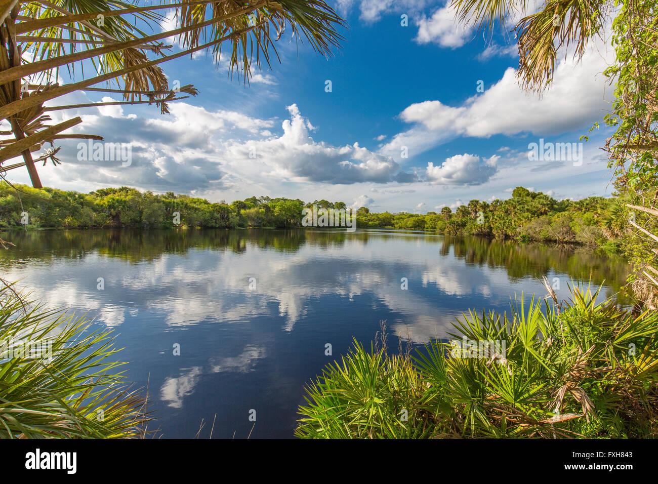 Deer Prairie Creek a Deer Creek Prairie preservare in Florida Venezia Foto Stock