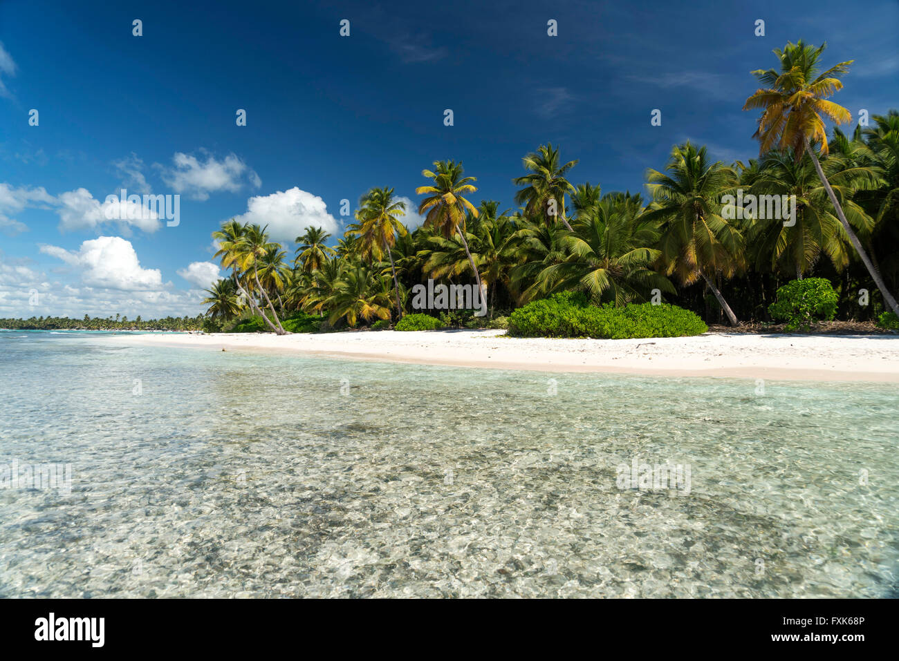 Sogno spiaggia spiaggia di sabbia con palme e il mare turchese, Parque Nacional del Este, Isla Saona, Repubblica Immagini Stock