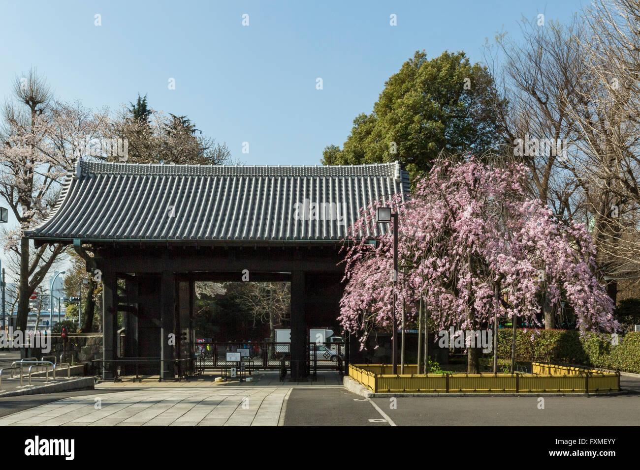 Vista del Tempio di Asakusa, Tokyo, Giappone Immagini Stock