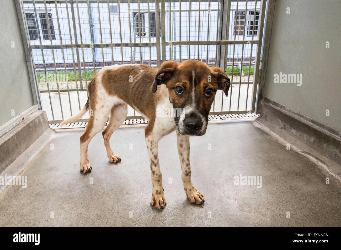 Cane abbandonato nel centro di salvataggio Immagini Stock