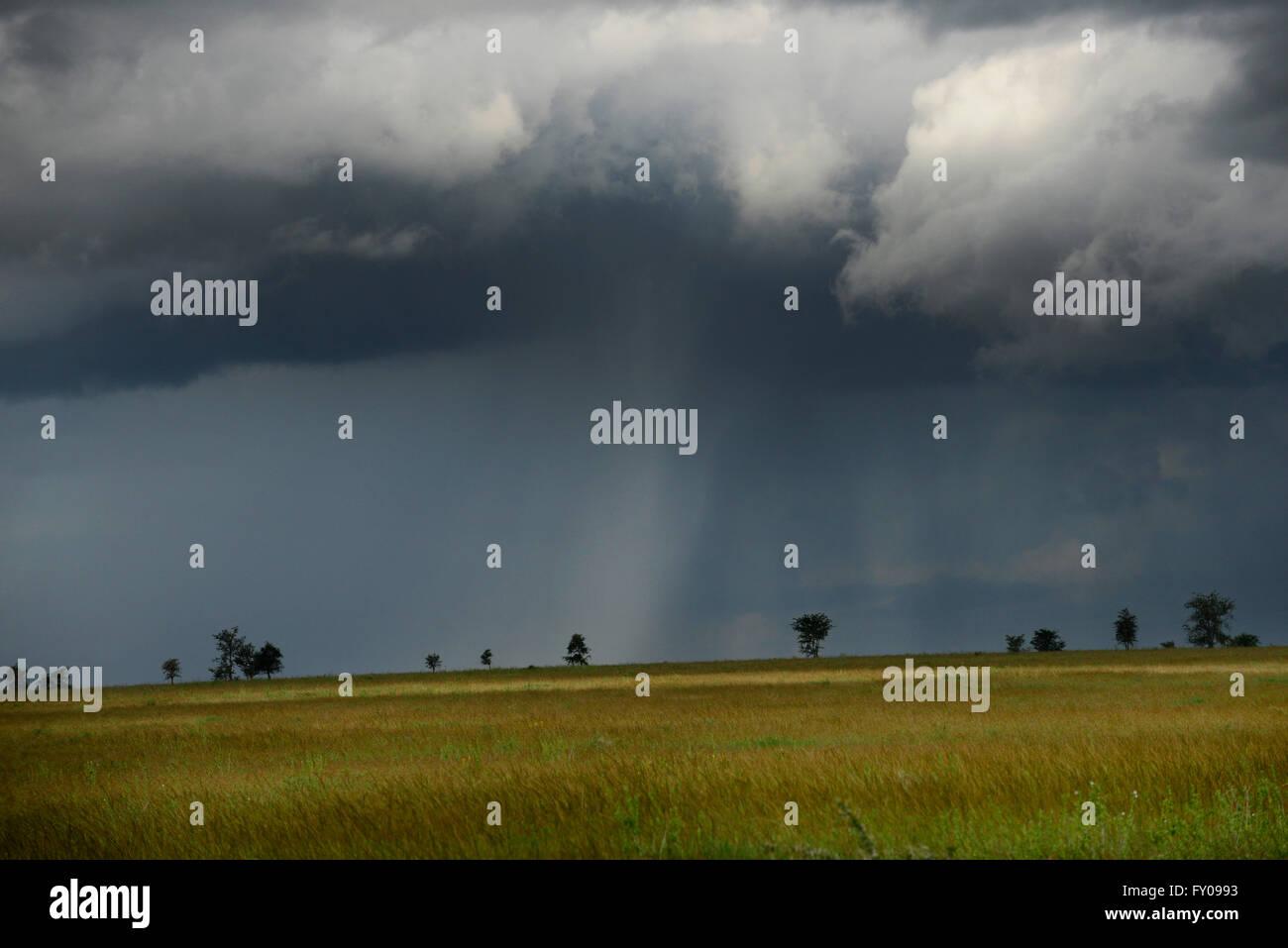 Una tempesta brewing oltre la savana nel parco nazionale del Serengeti. Immagini Stock