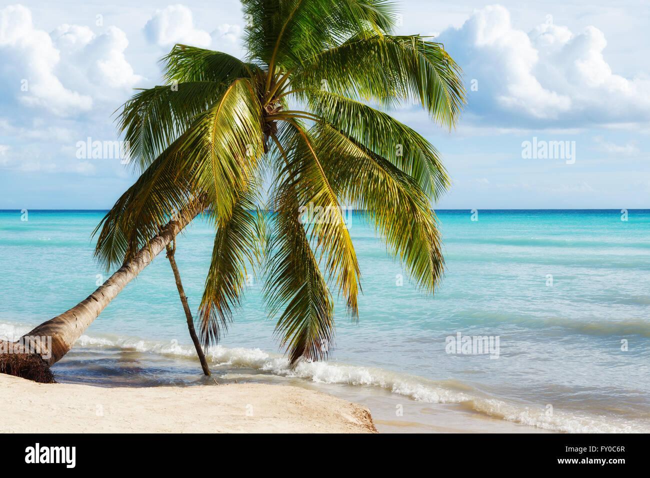 Paradise Beach nell'isola di Saona, Repubblica Dominicana Immagini Stock