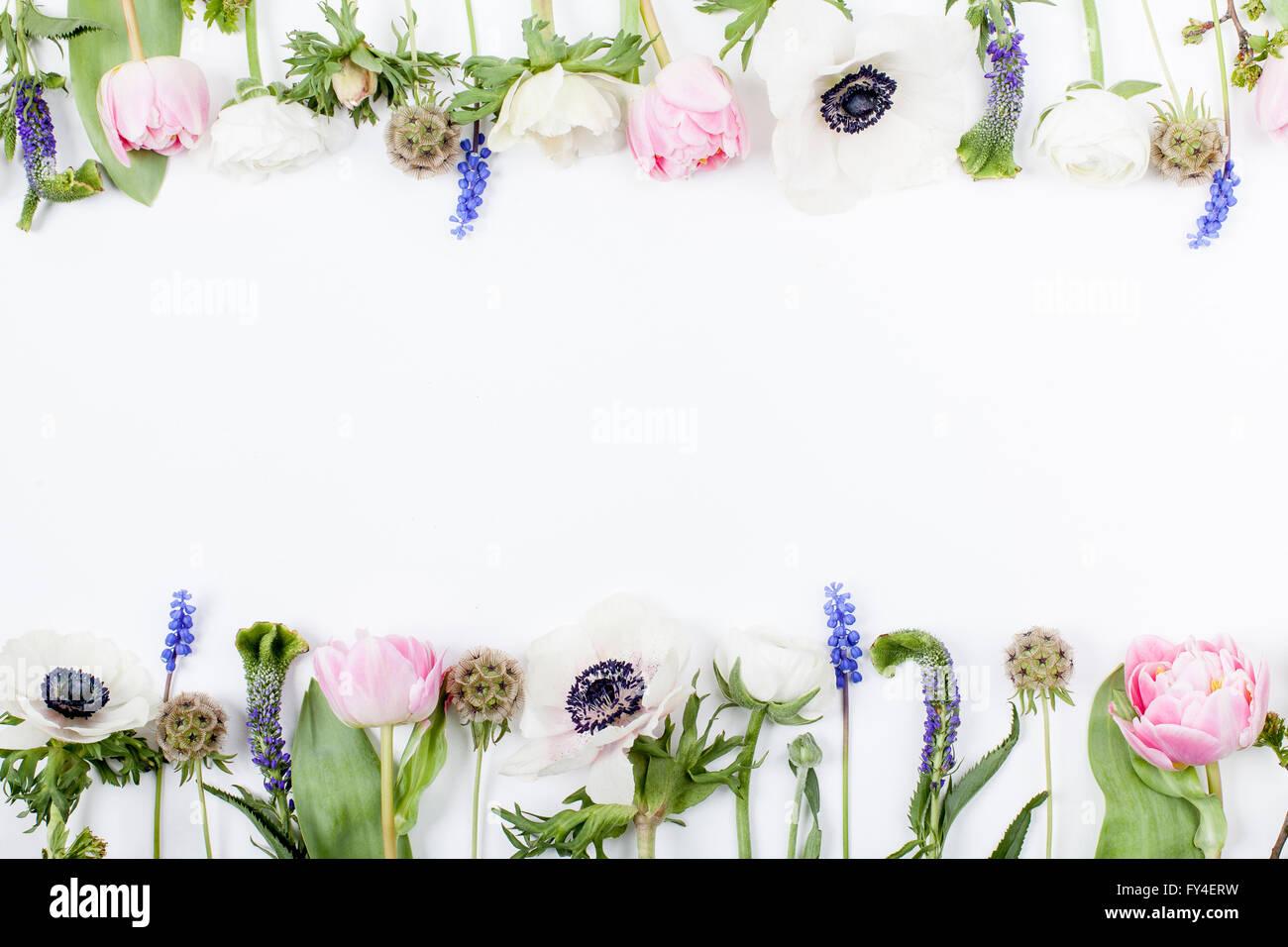Tulipani Rosa Anemoni Bianchi Spicchi Di Colore Rosa E Bianco