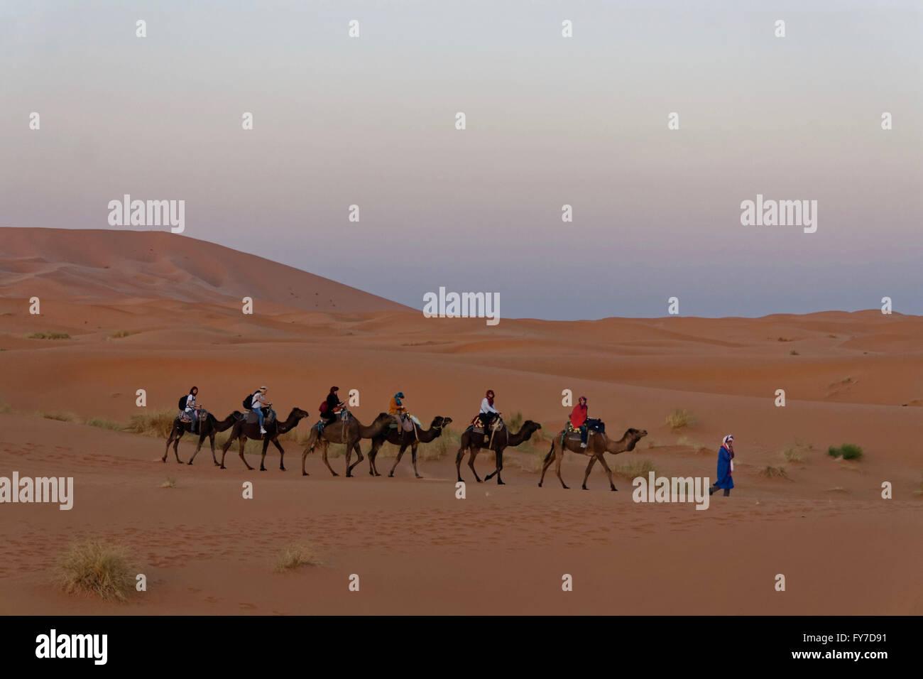 Viaggio in cammello di sera con sei persone e una guida in Erg Chebbi deserto vicino a Merzouga in Marocco. Foto Stock