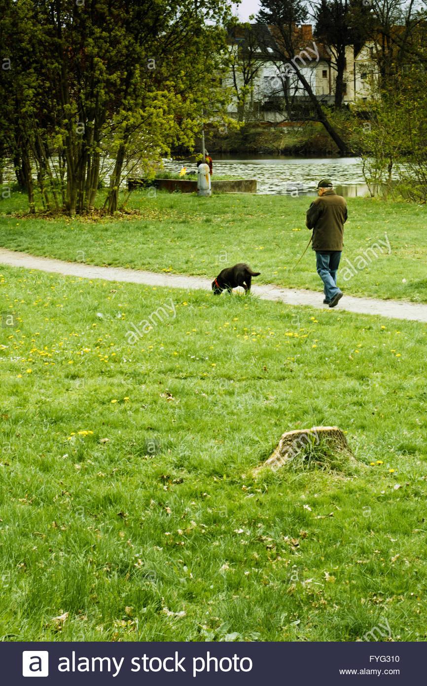 Uomo che cammina con il suo cane nel parco Immagini Stock