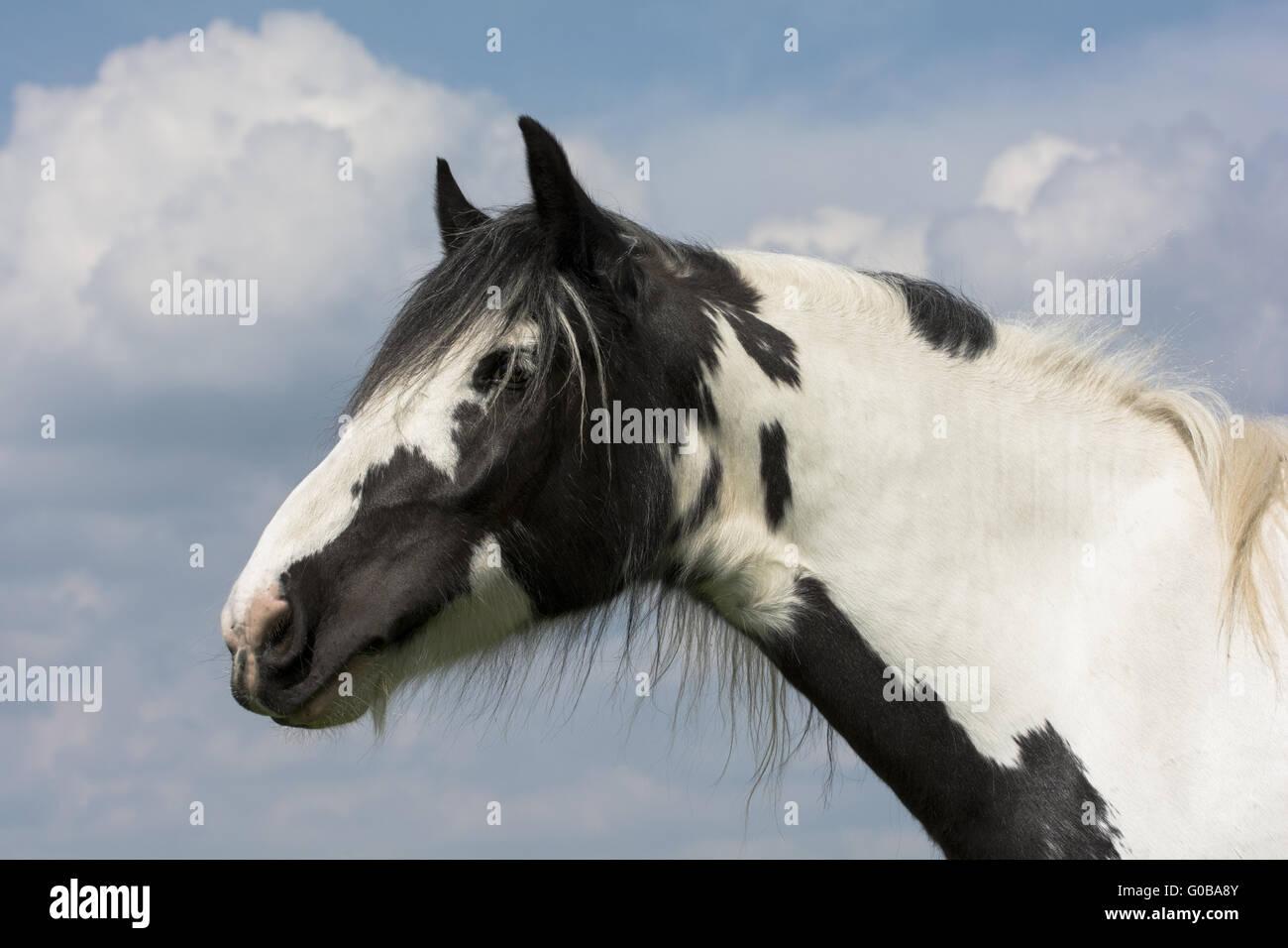 Cavalli Da Sogno Immagini & Cavalli Da Sogno Fotos Stock - Alamy