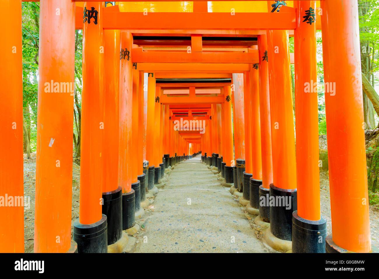 Fushimi Inari Santuario centrato nessuno foresta di alberi Immagini Stock