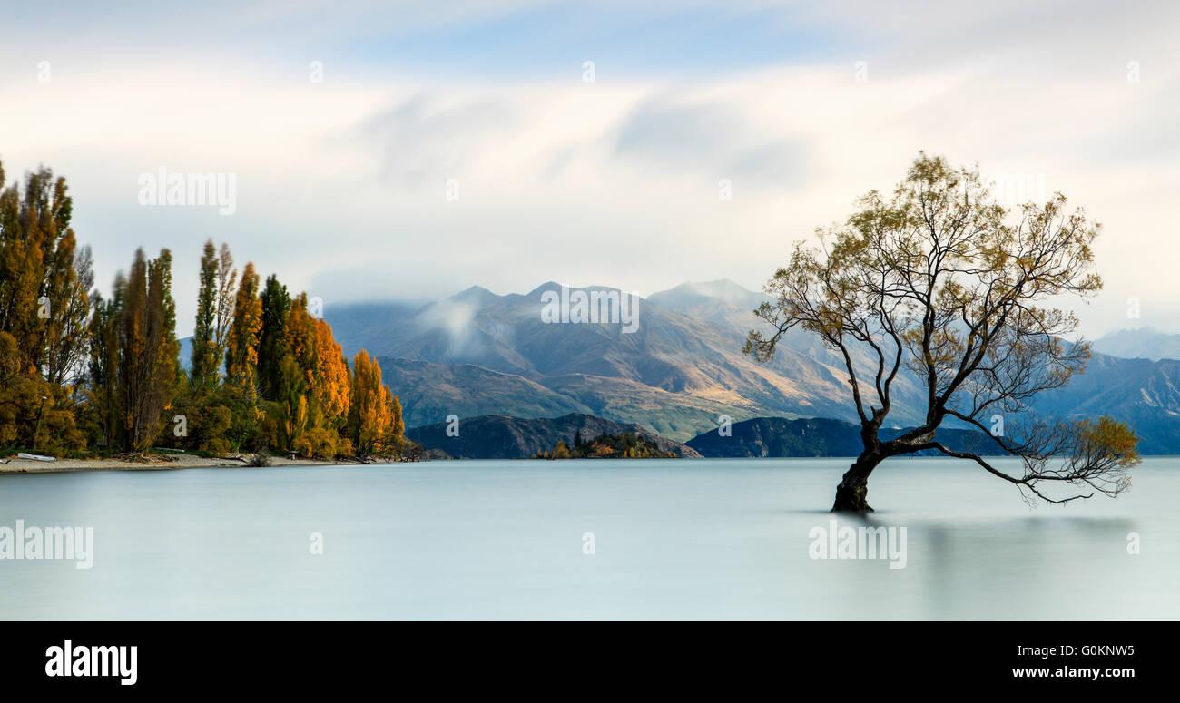 L'iconico lone tree del Lago Wanaka, Nuova Zelanda. Immagini Stock