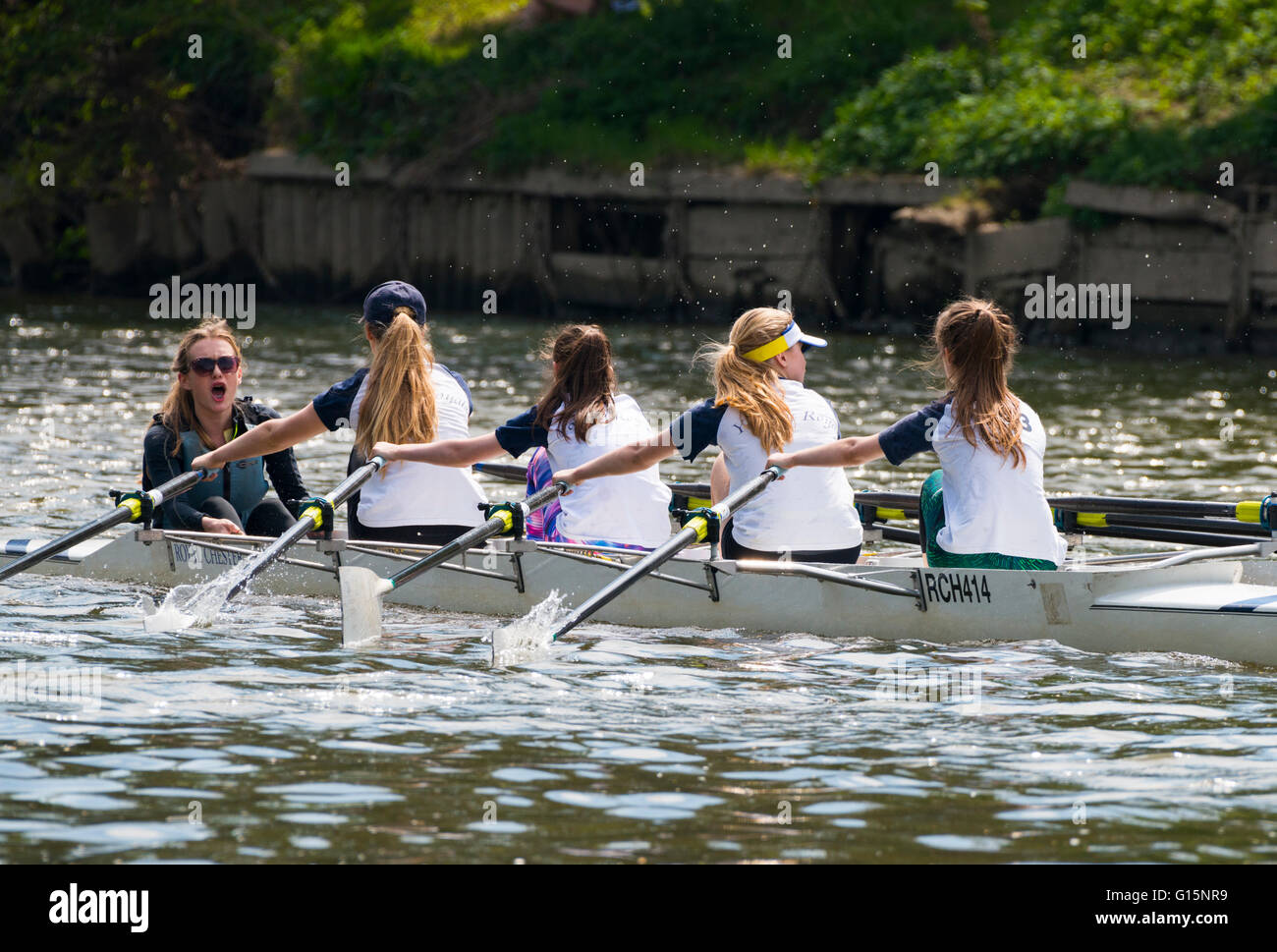 I rematori di competere a Shrewsbury regata sul fiume Severn, Shropshire, Inghilterra, Regno Unito. Immagini Stock