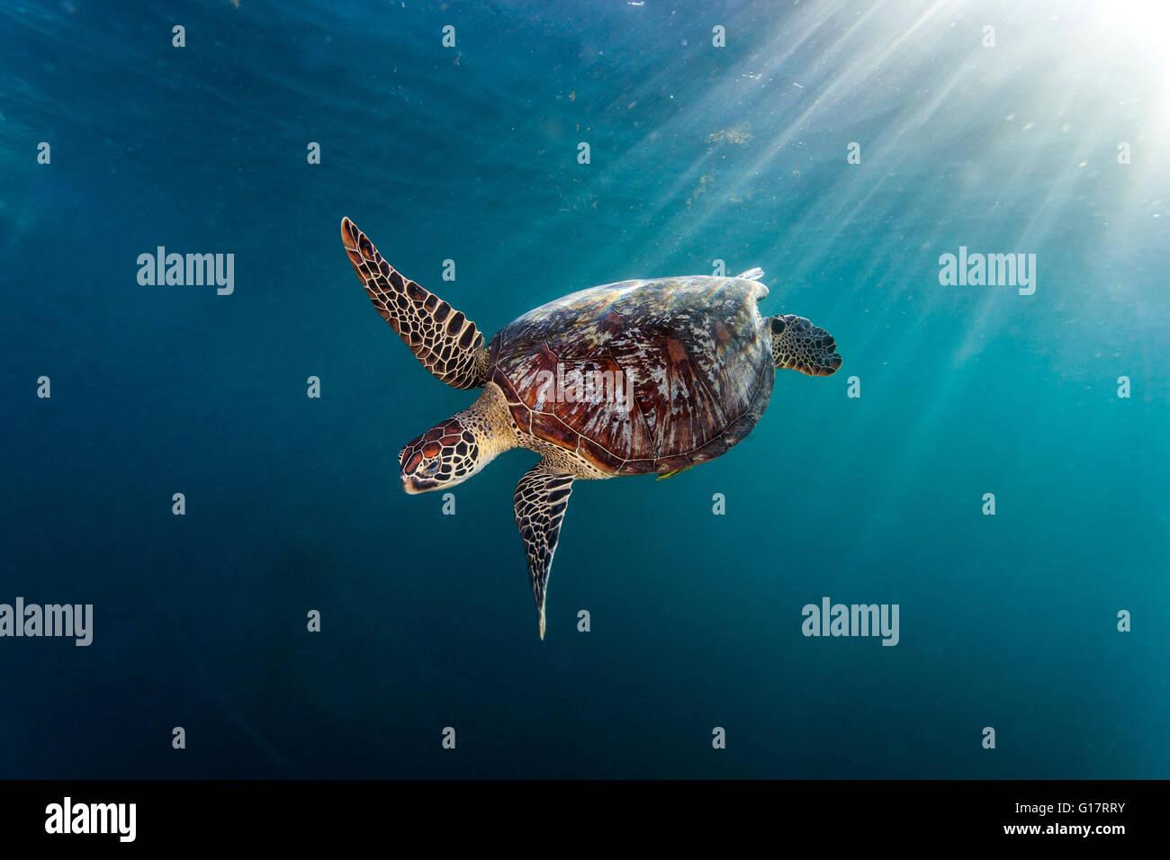 Turtle immagini turtle fotos stock alamy for Tartaruga di palude