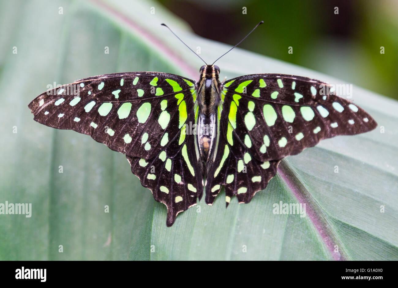 Farfalle al Museo di Storia Naturale Immagini Stock