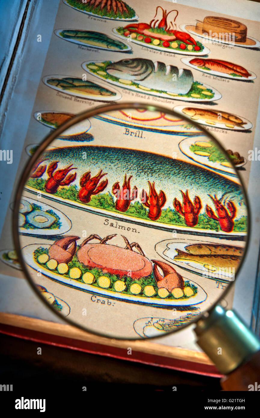Lente di ingrandimento su belle stampa litografia di Mrs Beeton del libro di cucina che illustra la varietà Immagini Stock