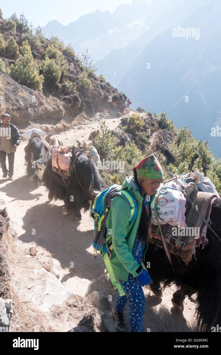 Yak i pastori con i loro yak che trasportano carichi su un sentiero nella regione del Khumbu, Himalaya, Nepal Immagini Stock