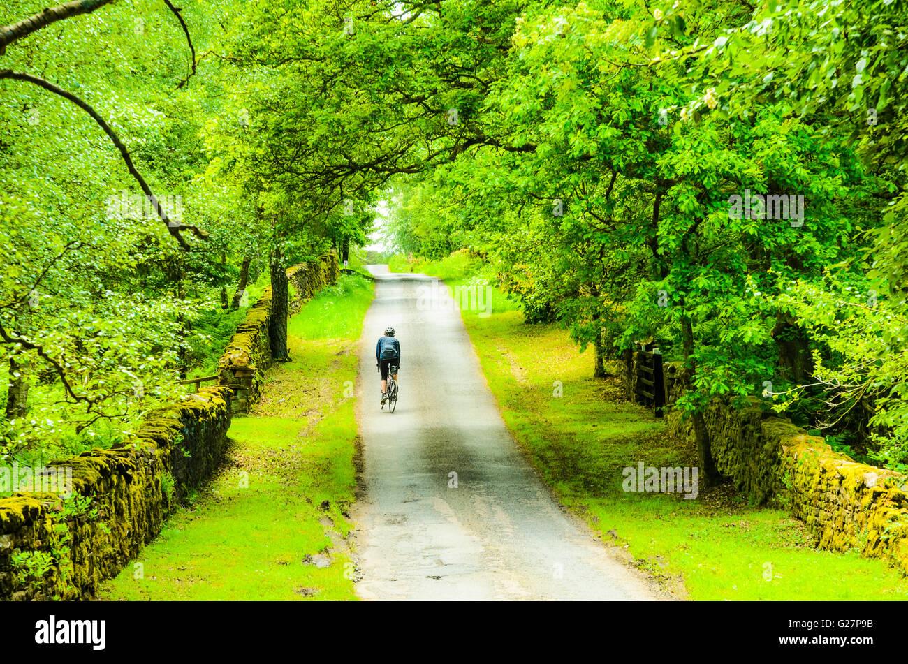Ciclista su una tranquilla stradina in Whinfell foresta vicino Center Parcs nell'Eden Vally Cumbria Foto Stock