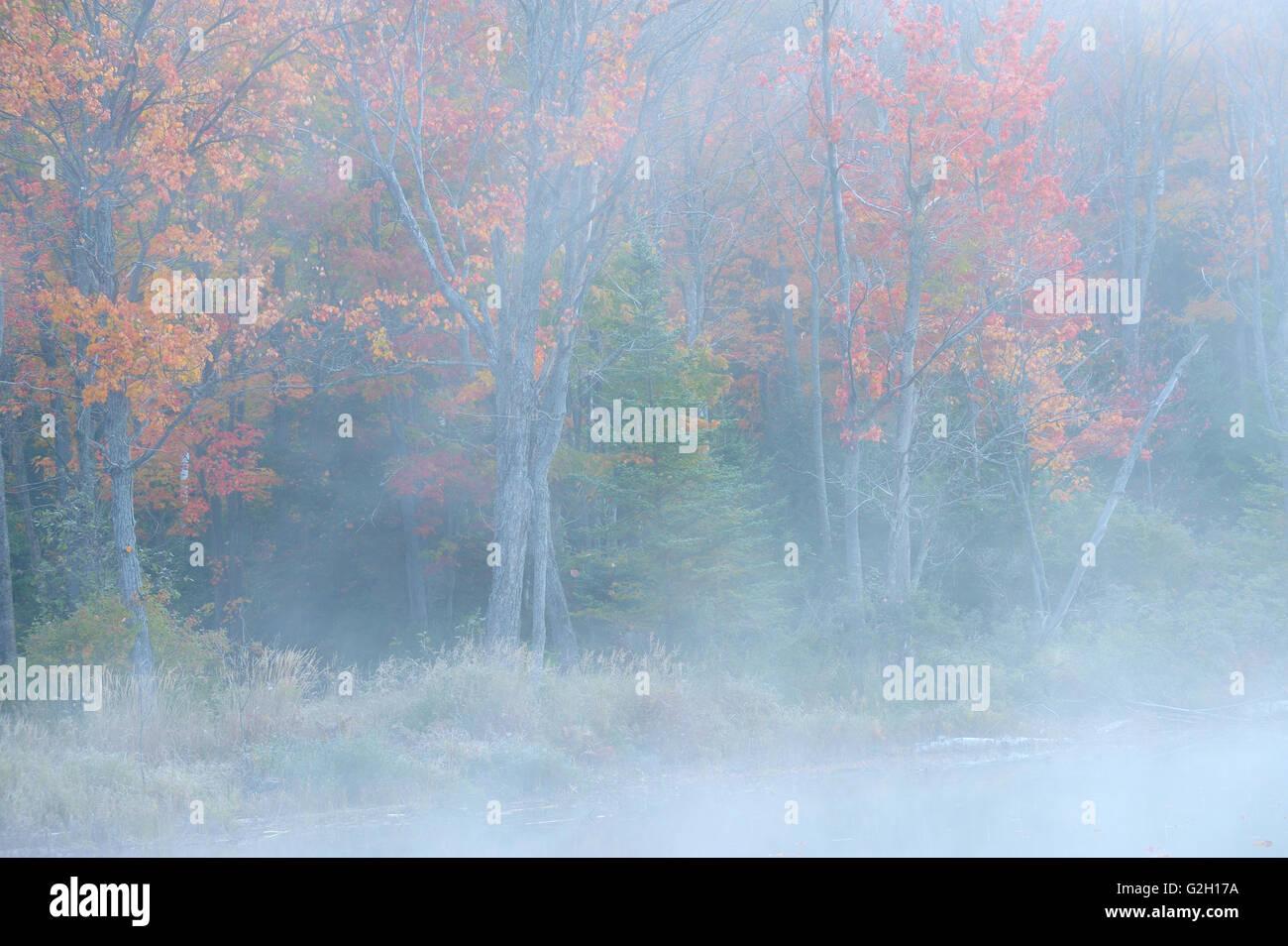 Foresta nel fogliame di autunno e la nebbia a silenzioso Lago Lago silenzioso parco provinciale Ontario Canada Immagini Stock