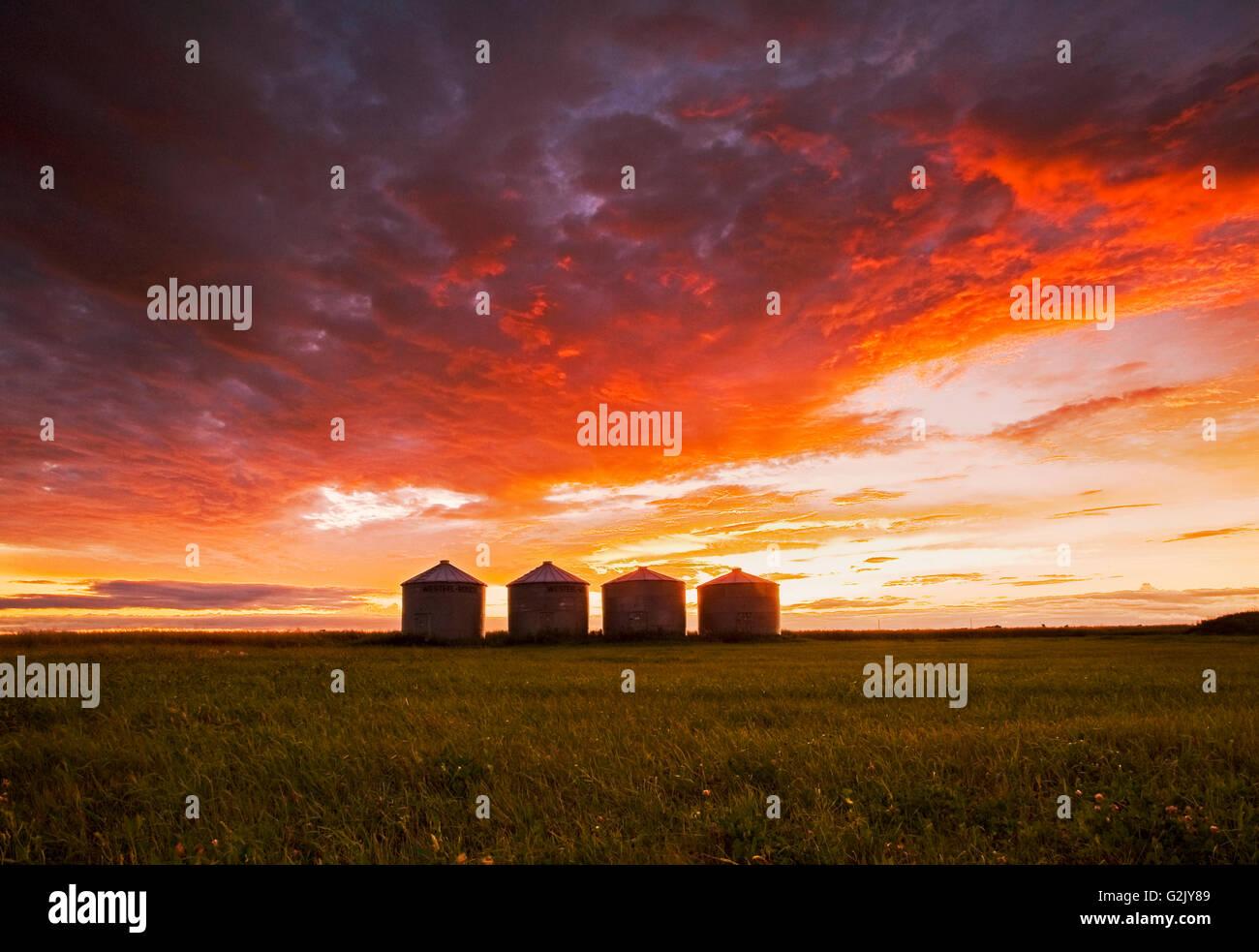 Grano deposito bidoni al tramonto, vicino a Carey, Manitoba, Canada Immagini Stock