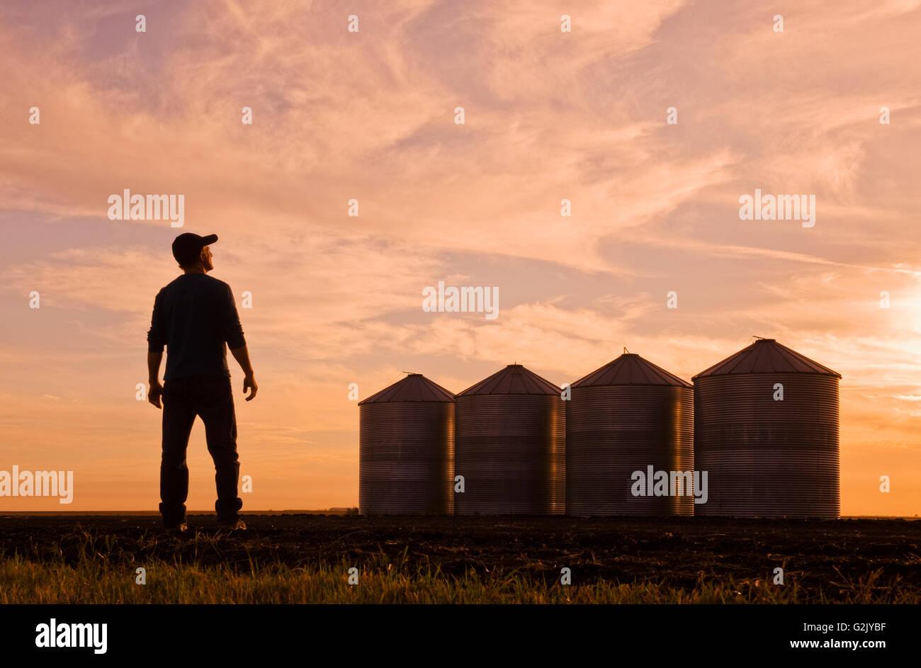 Un agricoltore si affaccia sul grano deposito bidoni/silos al tramonto,vicino a Carey, Manitoba, Canada Immagini Stock