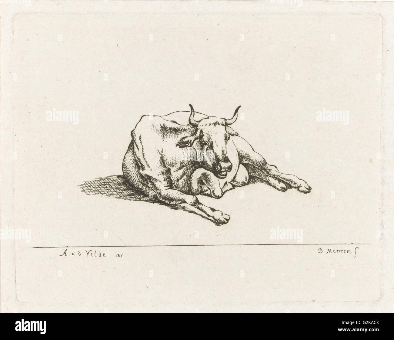 Giacente mucca, D. Merrem, 1700 - 1800 Immagini Stock