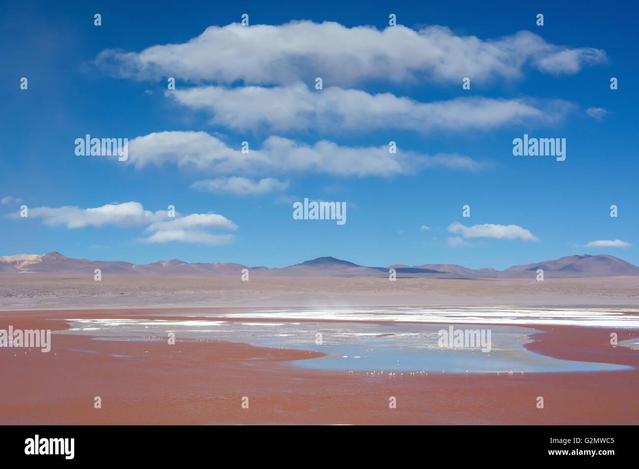 Laguna Colorada con acqua rossa a causa di un elevato contenuto di alghe in uyuni, lipez, Bolivia Immagini Stock