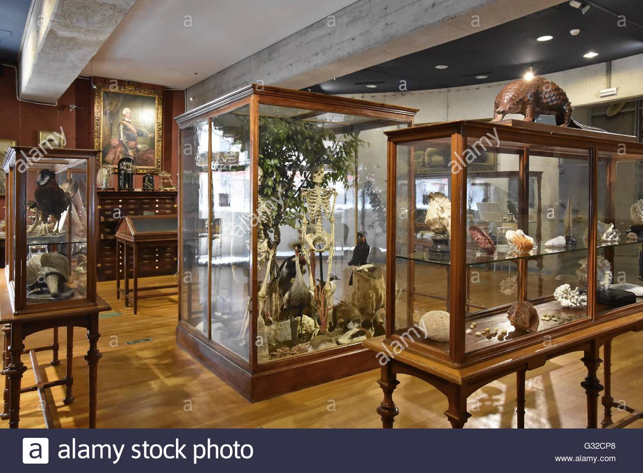 Display in vetro vitrines Museo di Scienze Naturali di Madrid Spagna Europa Immagini Stock