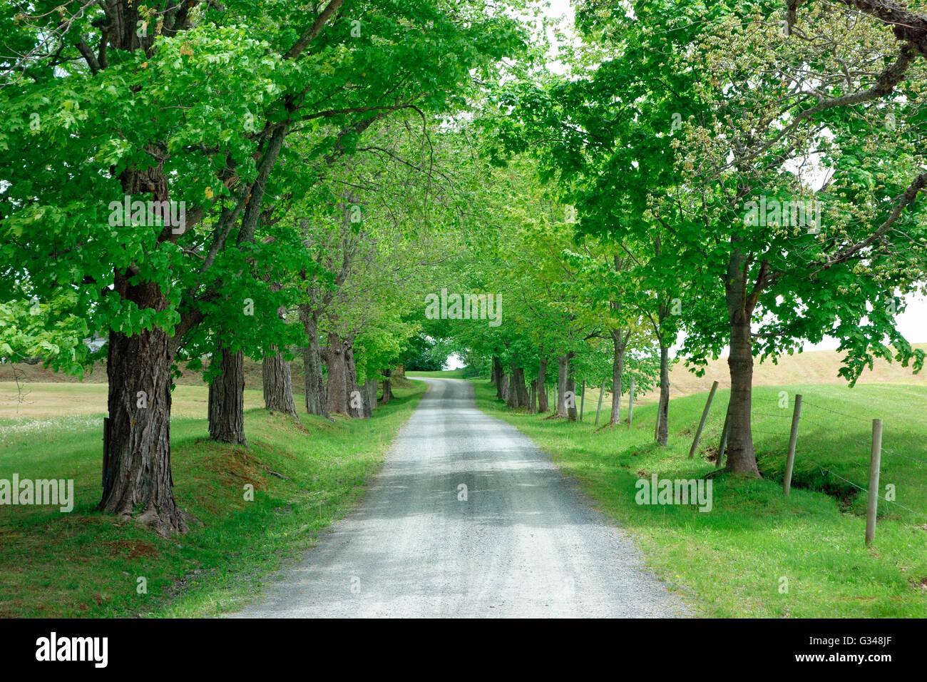 Un generico paese lane road con i campi, recinzione e alberi in primavera Immagini Stock