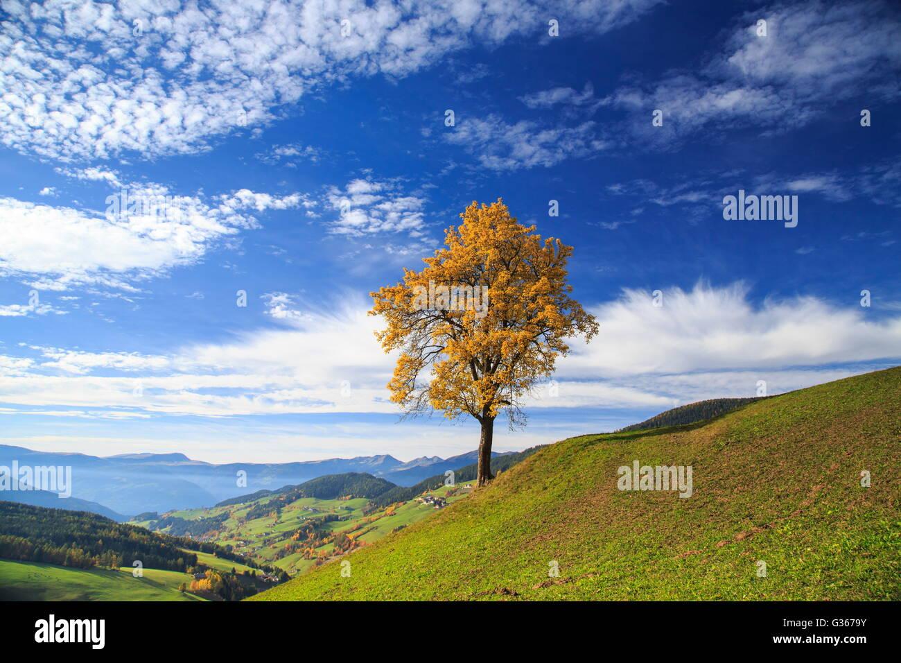 I colori dell 39 autunno di un albero affacciato sulla val di - Immagine dell albero a colori ...