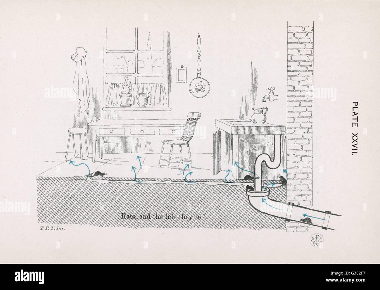 Ratti e il racconto raccontano data: 1878 Immagini Stock