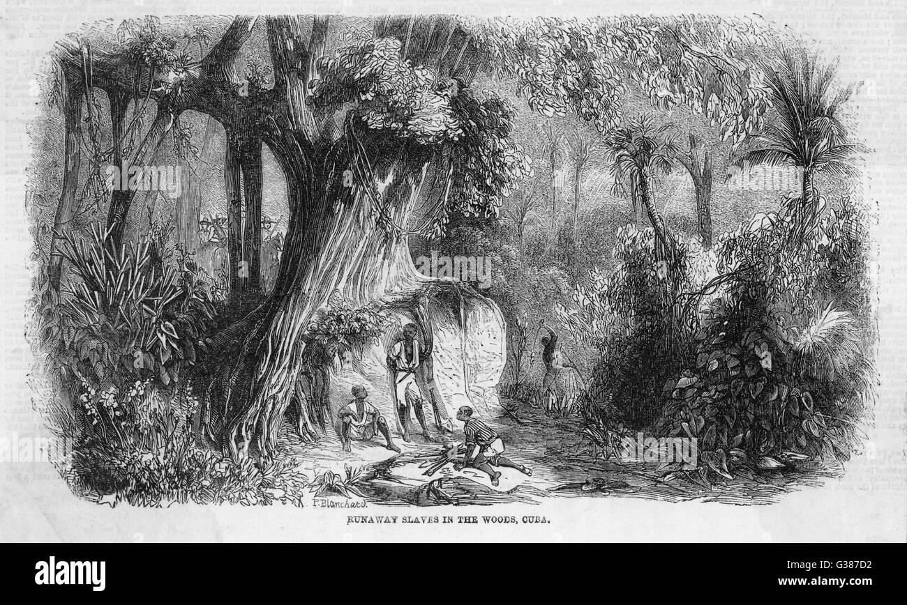 Runaway schiavi nei boschi, Cuba data: 1860 Immagini Stock