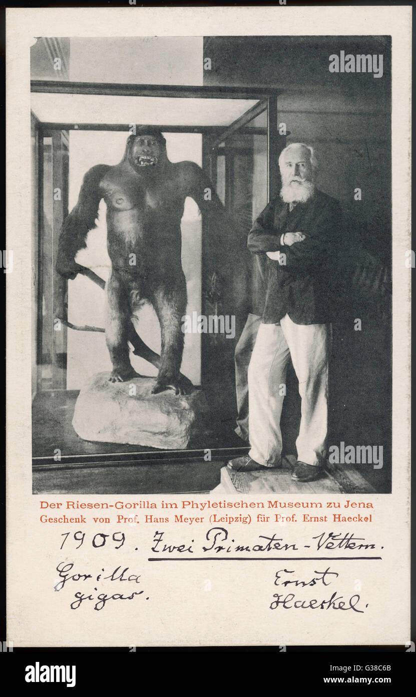 ERNST HAECKEL scienziato tedesco con un gorilla nel 1909 Data: 1834 - 1919 Immagini Stock