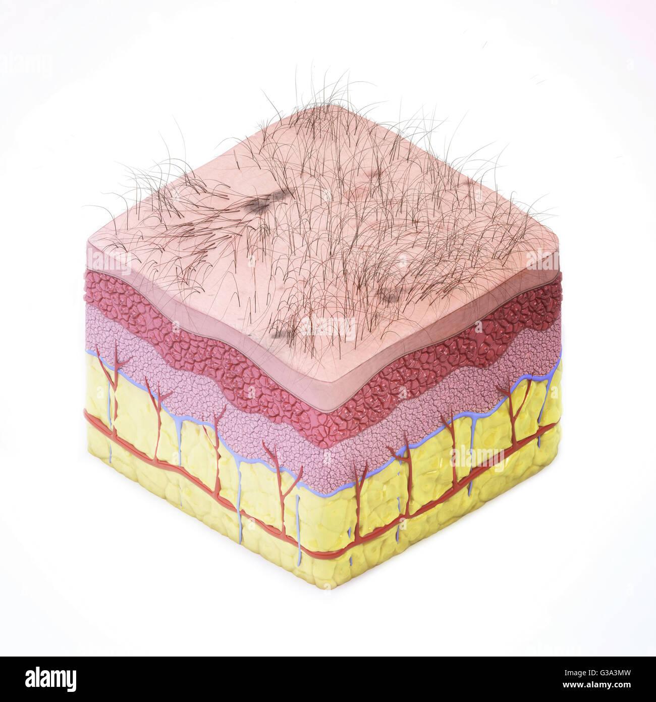 La pelle umana - il rendering 3D Immagini Stock