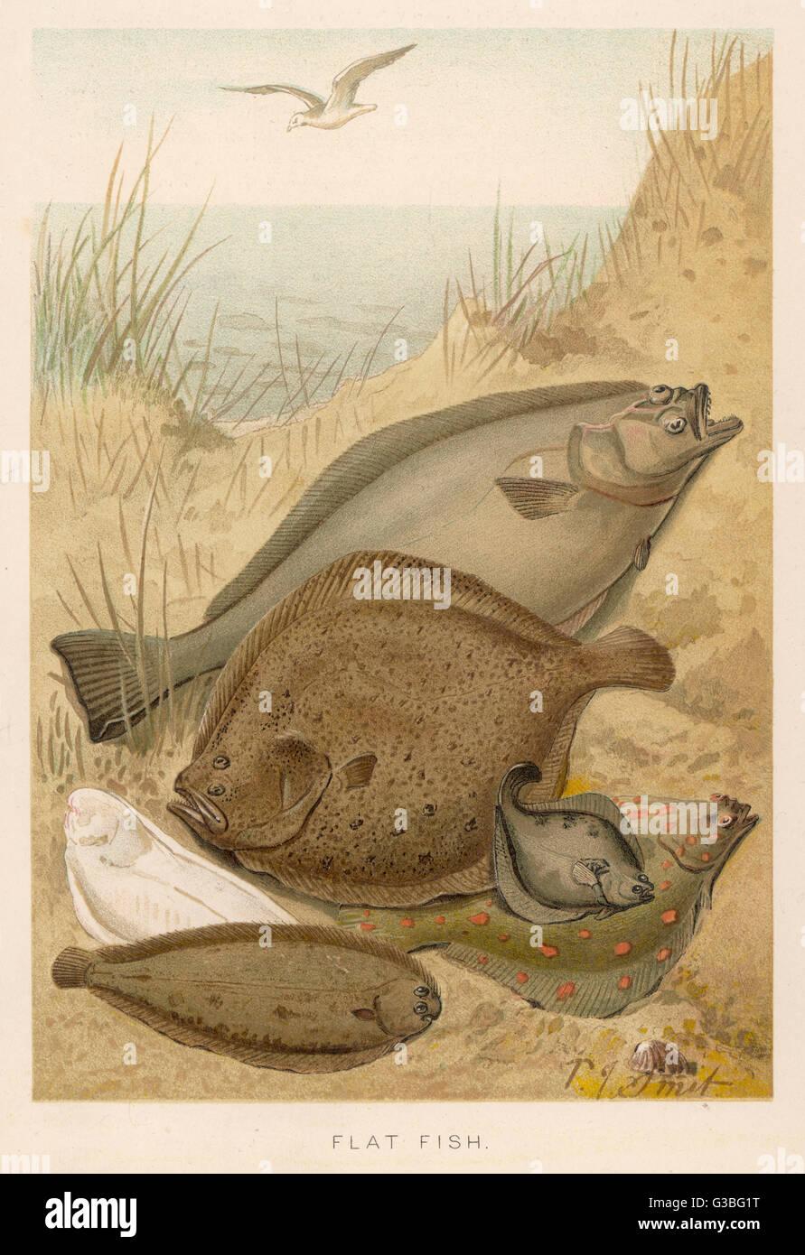 Un Gruppo Misto Di Pesce Piatto Ippoglosso Atlantico Del Rombo