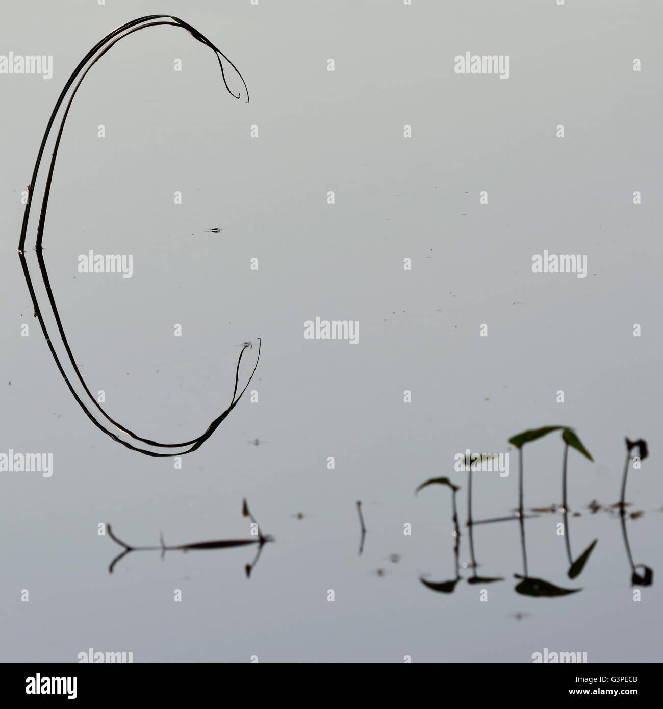 Nature alfabeti Immagini Stock