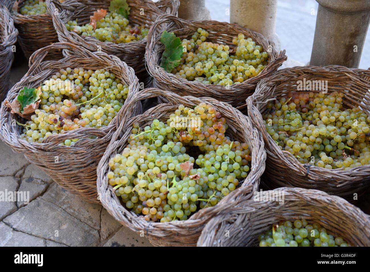 Uva Sherry Jerez de la Frontera, Andalusia Spagna cestini di vimini, vendemmia vini Immagini Stock