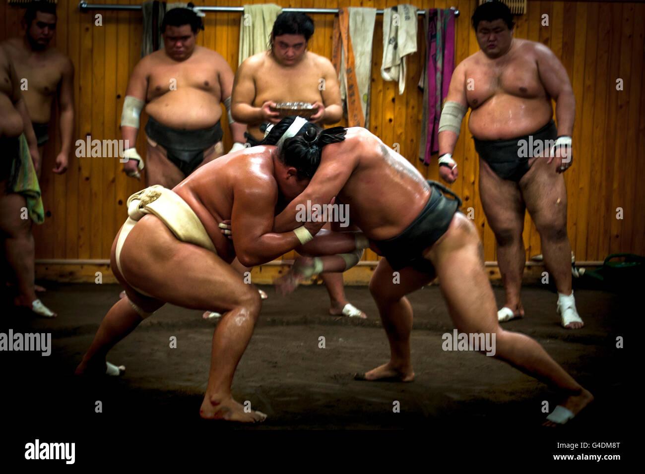 Lottatore di Sumo, Tokyo Giappone Immagini Stock