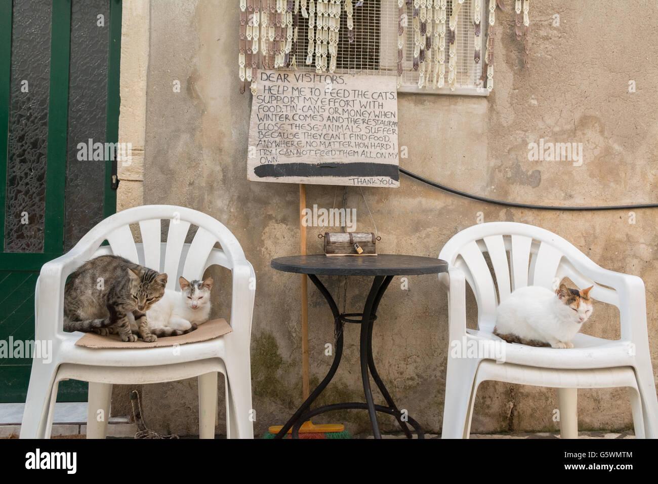 Gatti selvatici in un vicolo di modo sulla piccola isola greca di Paxos. Un team di volontari di Paxos supportano Immagini Stock